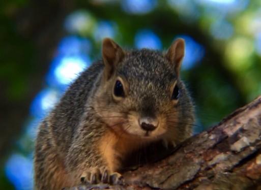 North Carolina Wildlife Conservation Efforts